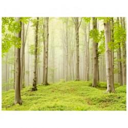 Фотообои Весенний лес Х5 Люкс 291*204см /9 листов/
